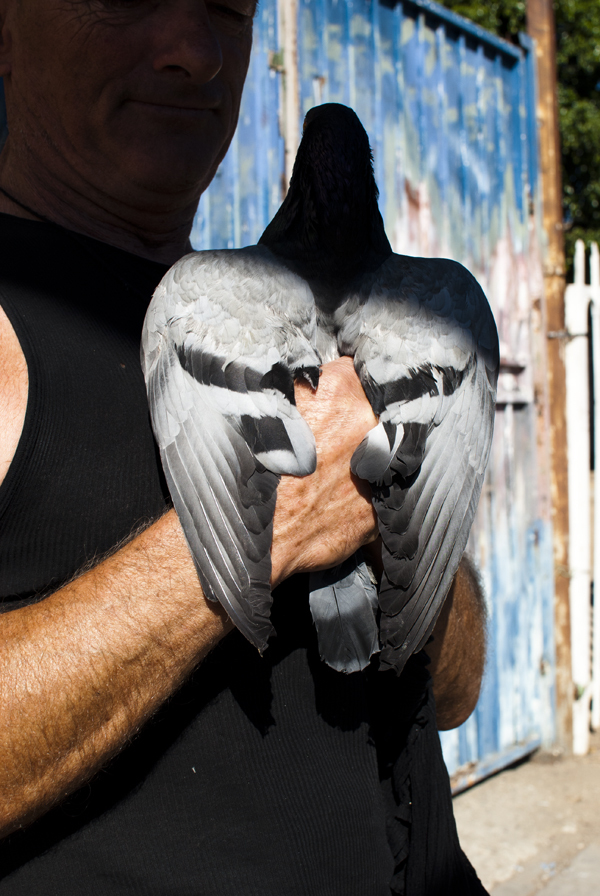 Los Angeles Pigeon Man